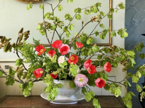květiny ahygge